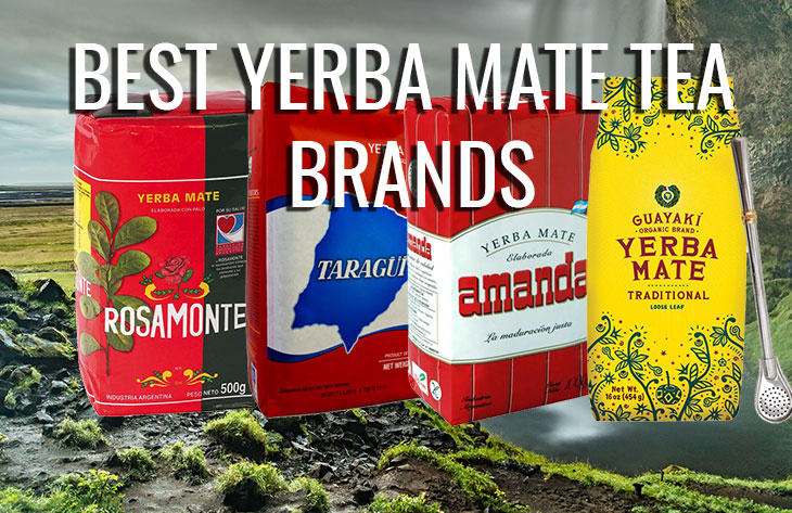 What Is The Best Yerba Mate And Where To Buy It From